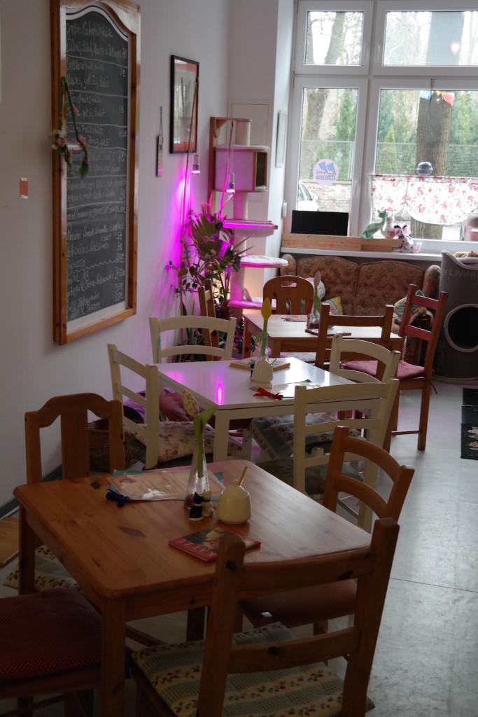 pee pees katzencafé, berlin, neukölln, kaffee, kuchen, trinken, entspannen, süß4