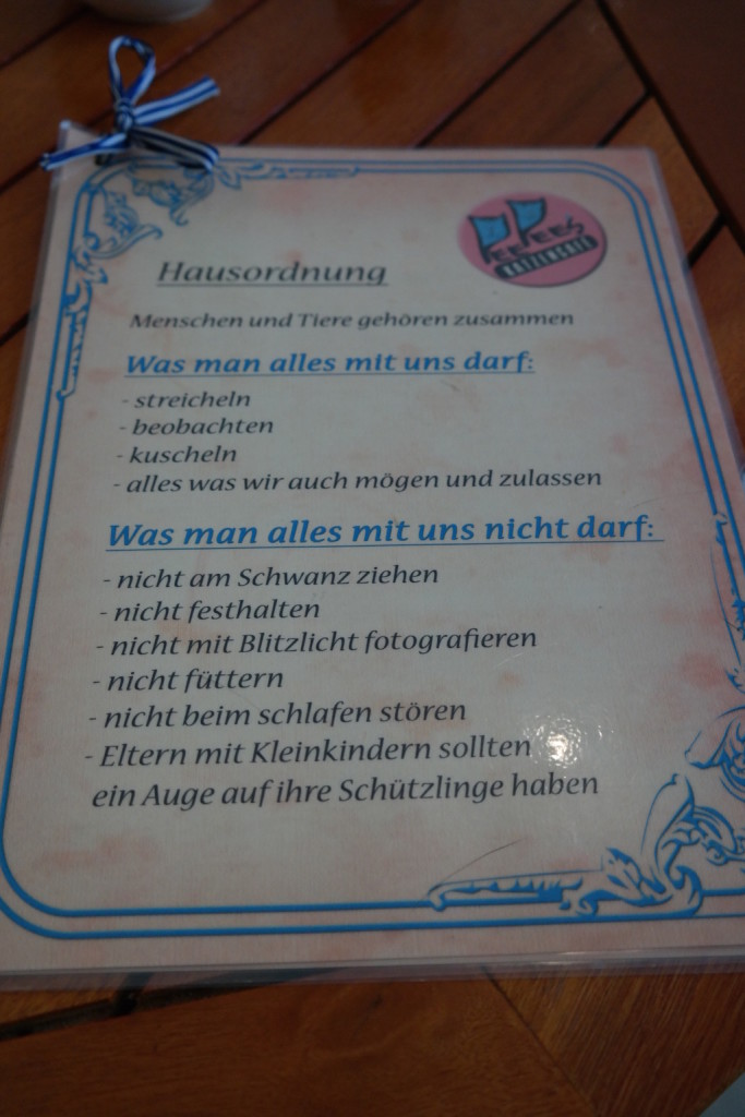 pee pees katzencafé, berlin, neukölln, kaffee, kuchen, trinken, entspannen, süß3